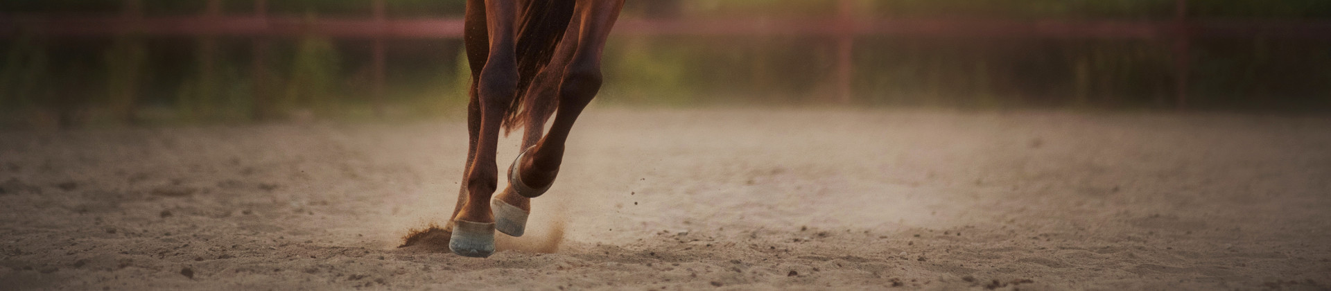 Operation of an equestrian centre: Management-consultation