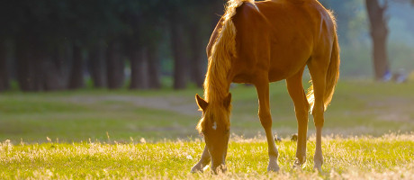 Equine pension facility-planning