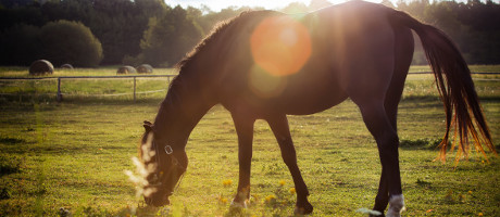 plan a rehabilitation centre for horses